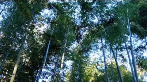 zvuki-prirody-2